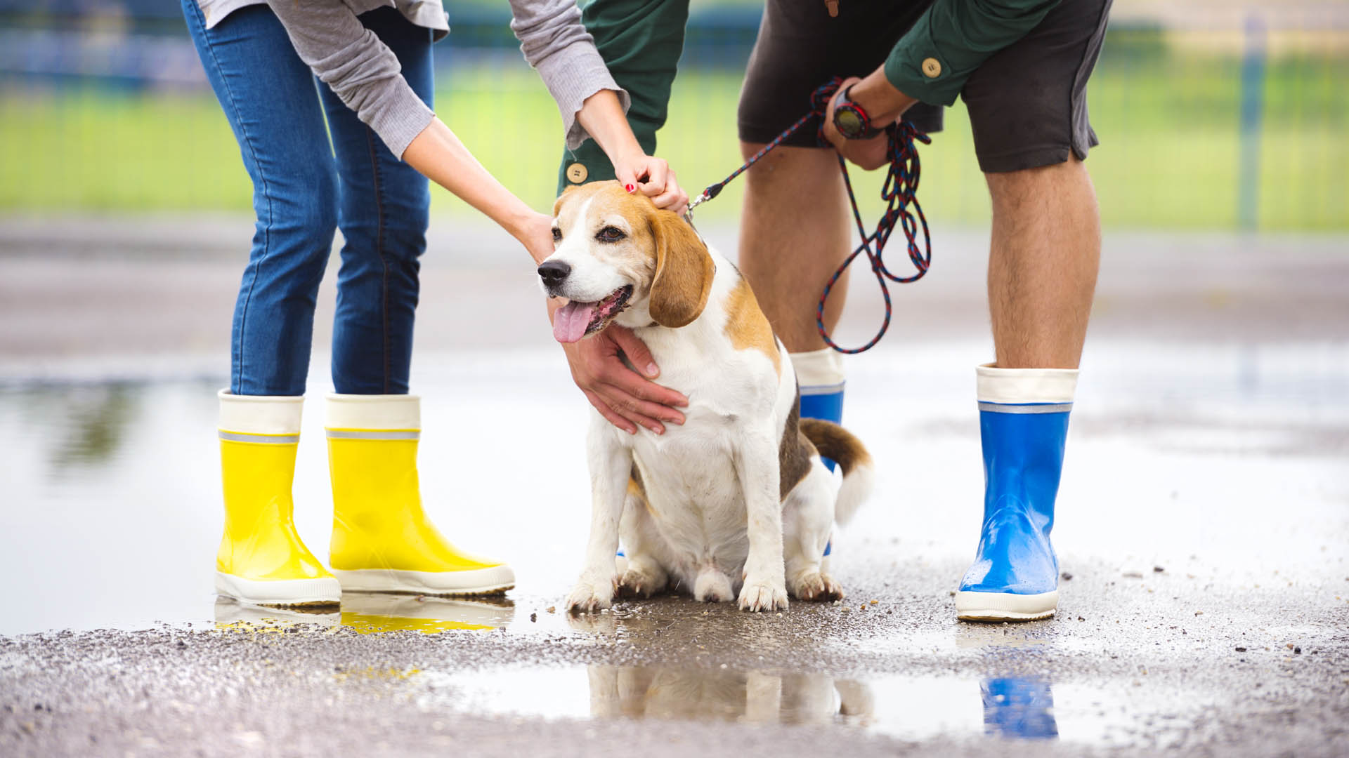 DOG WALKING | Professional animal services in West Lothian